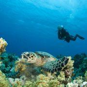 reef-diving